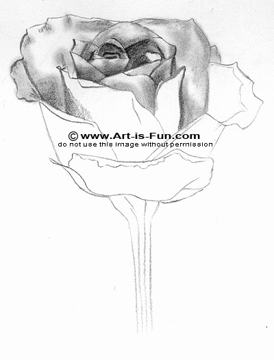 How to Pencil Draw a Rose