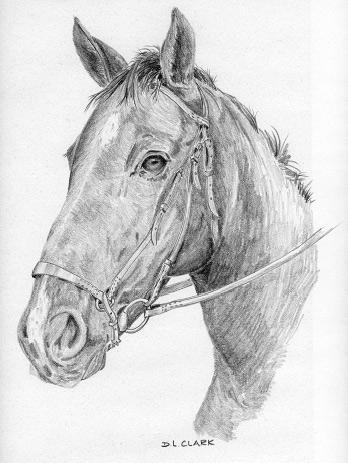 学习如何画一匹马