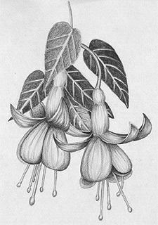 学习如何画花