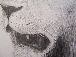 Learn to draw whiskers using a special technique: