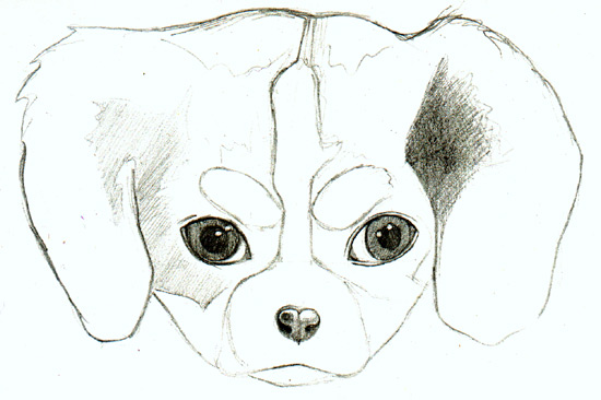 Shading a drawing of a puppy