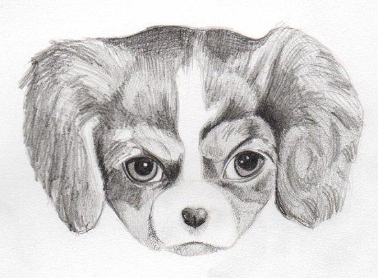 Drawing a puppy on Art is Fun