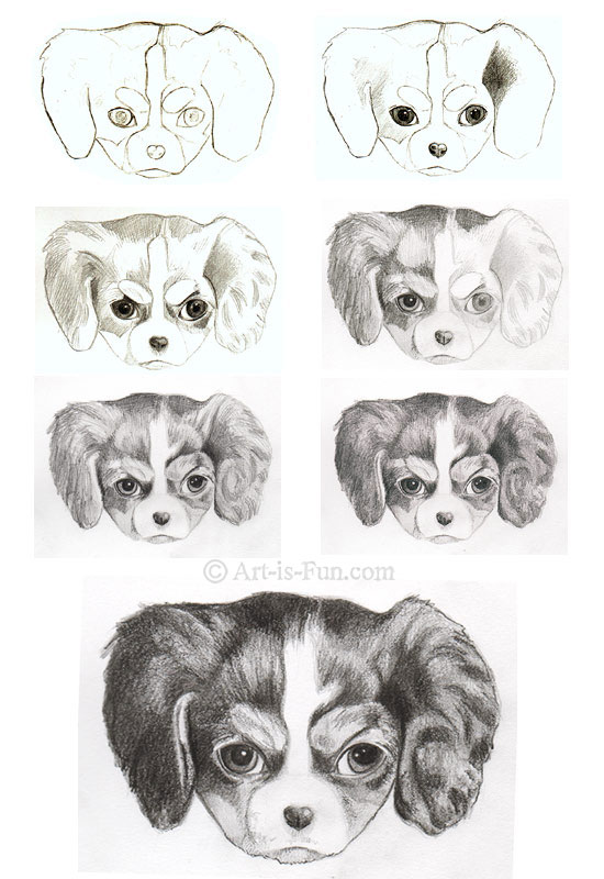 How to draw a puppy step-by-step
