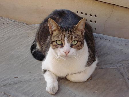 Cat photo from Italy