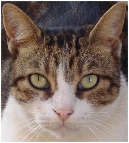 猫照片特写镜头