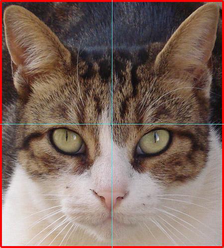 猫照片绘制