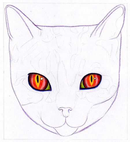 Coloring the cat's eyes