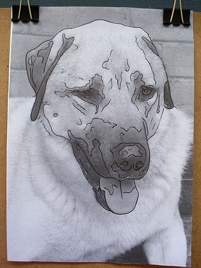 Dog Outline Transfer Drawing