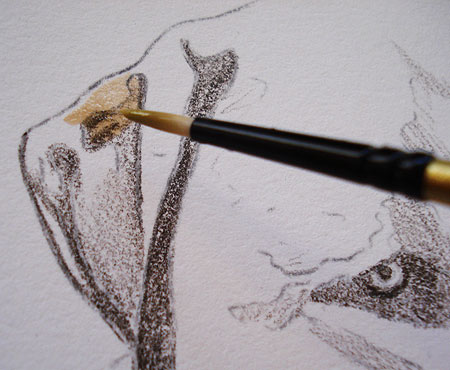 Observe how I apply the watercolor directly on top of the colored pencil.