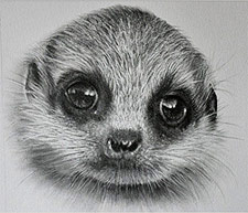 Meerkat Drawing by Doreen Cross