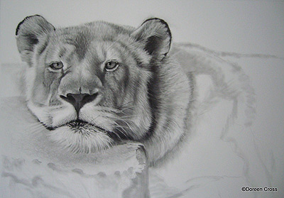 Starting on the lioness' body and the rock