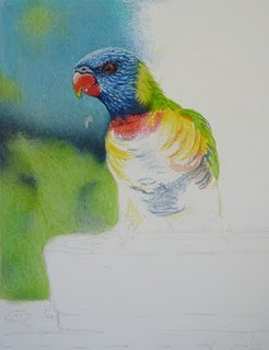 The beginning stage of Doreen Cross' lorikeets drawing