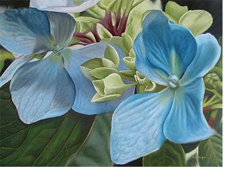 婴儿蓝色绣球花