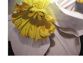 黄色白色黄水仙