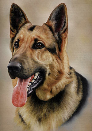 German Shepherd Pastel Pencil Painting by Colin Bradley