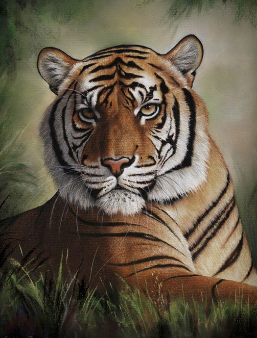 Tiger Pastel Pencil Art by Colin Bradley