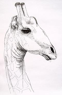 Giraffe  by Sue Pownall