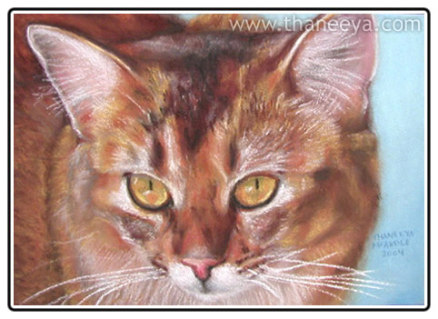 Pastel Cat Drawing by Thaneeya