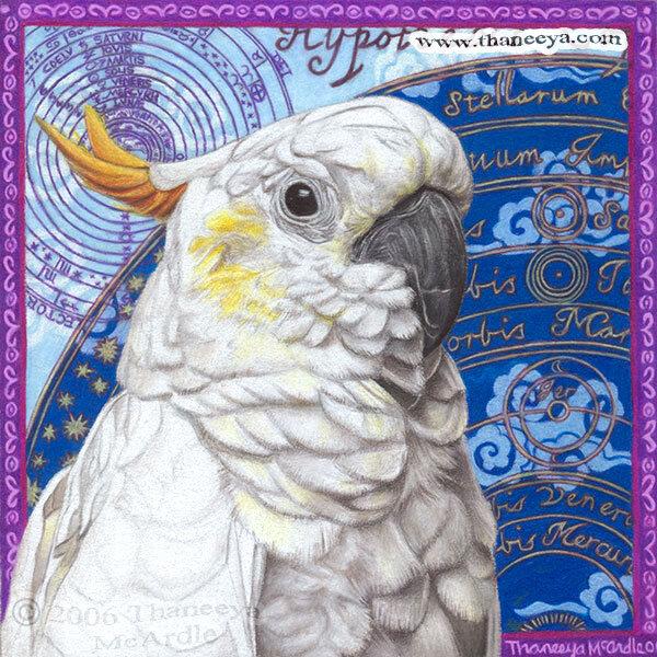 我用prismacolor软芯的彩色铅笔画了这个鹦鹉