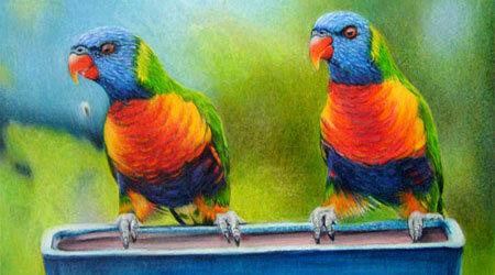 鸟类由Doreen Cross画画