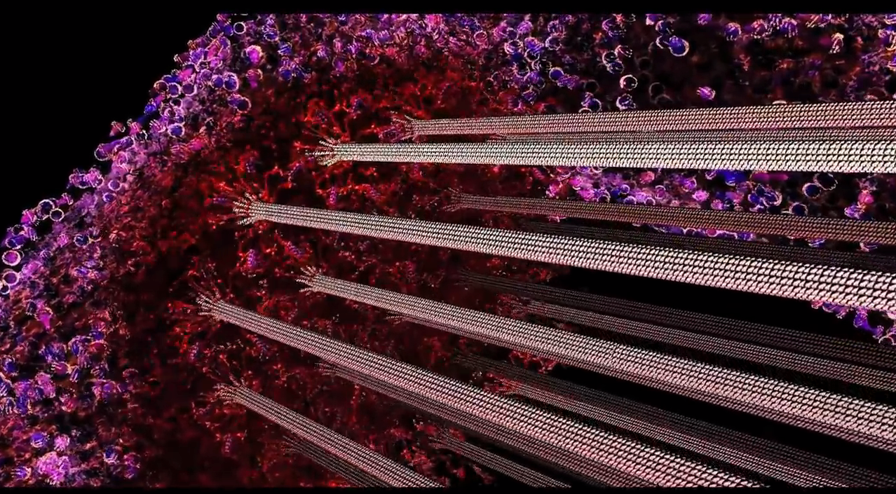 Visualization: Biology and Complex Circuits
