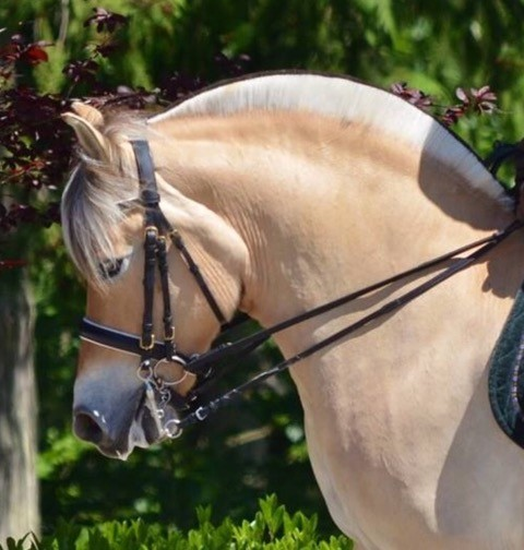 Lakisha - Owner: Karen Petty 2008 Fjord Mare3rd Level