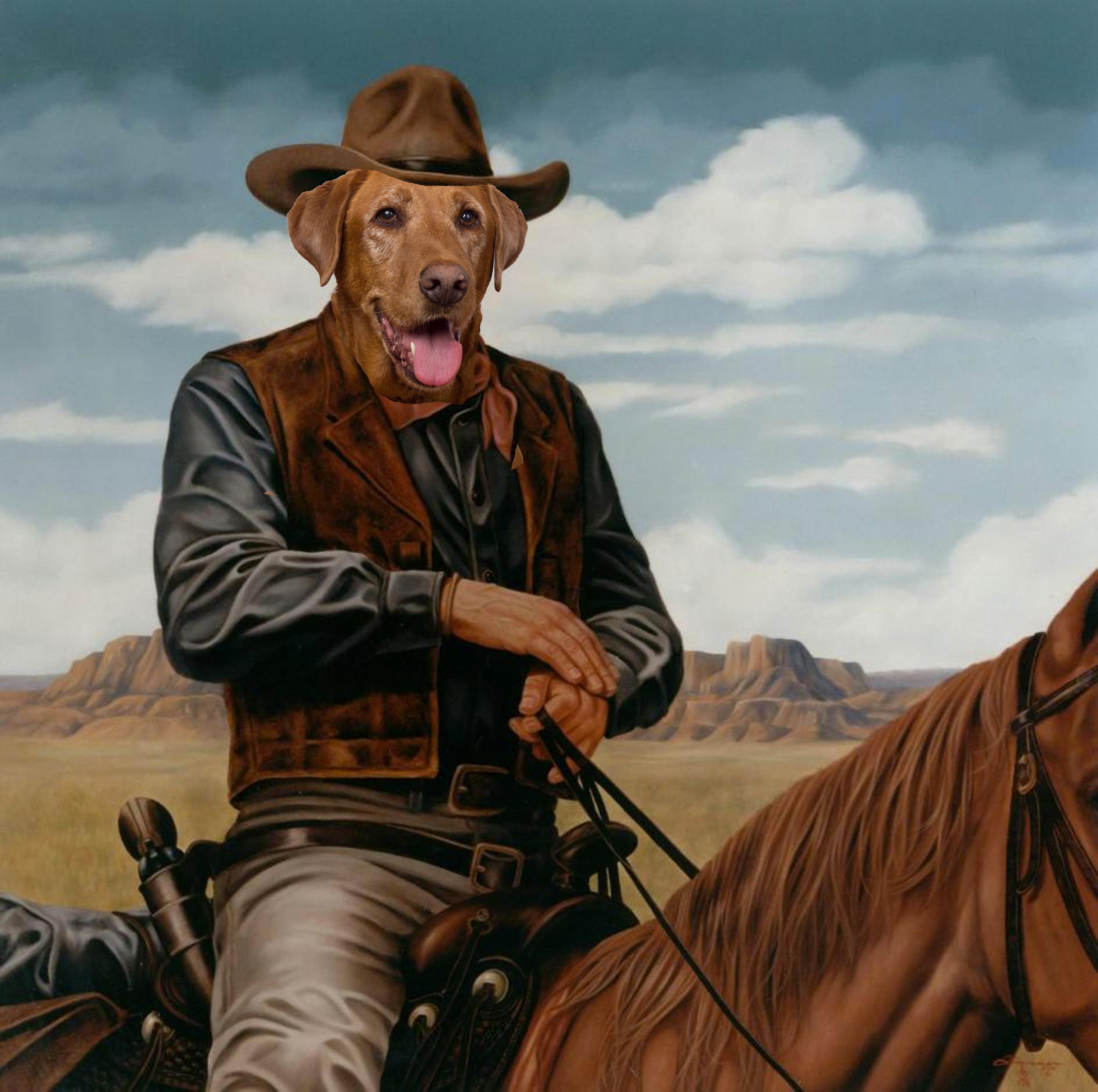 Cooper the Labrador as John Wayne