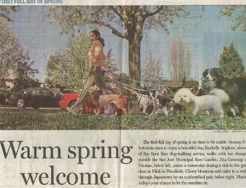 our first time in the san jose mercury news, We made the front page!