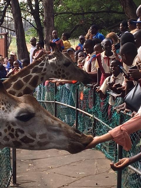 Feeding the giraffe was great fun!