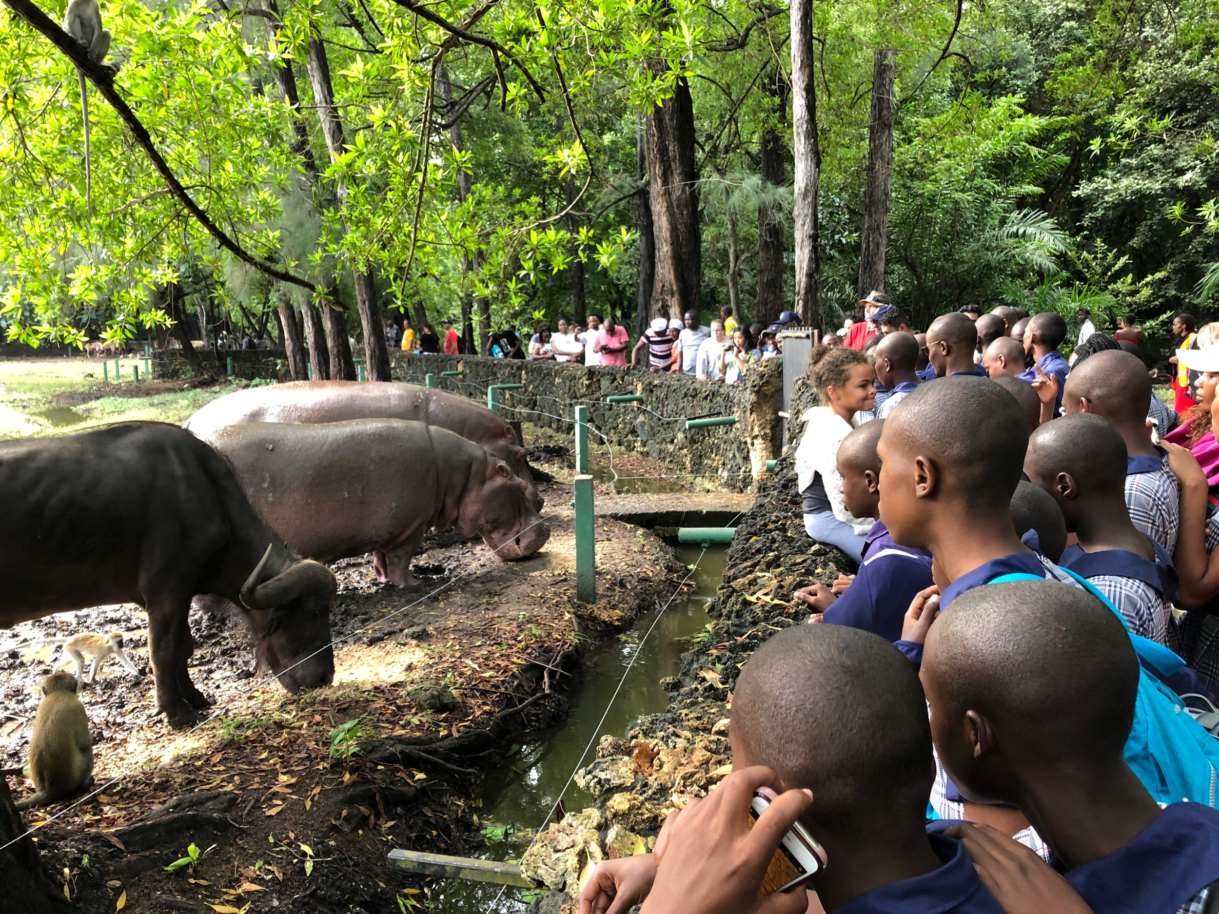 Hippos and water buffalo