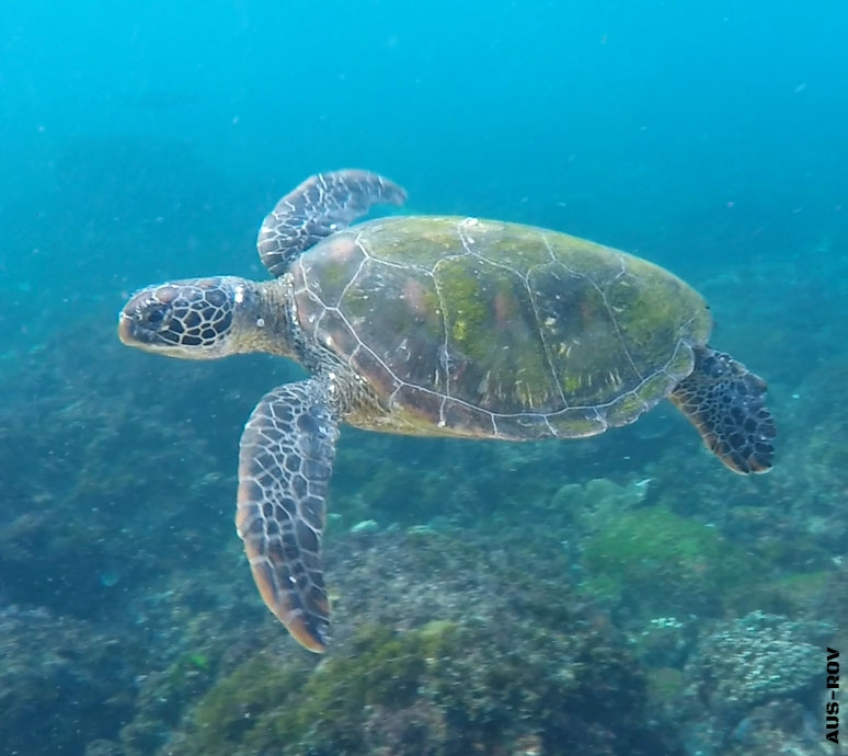 AUS-ROV Turtle Monitoring Program