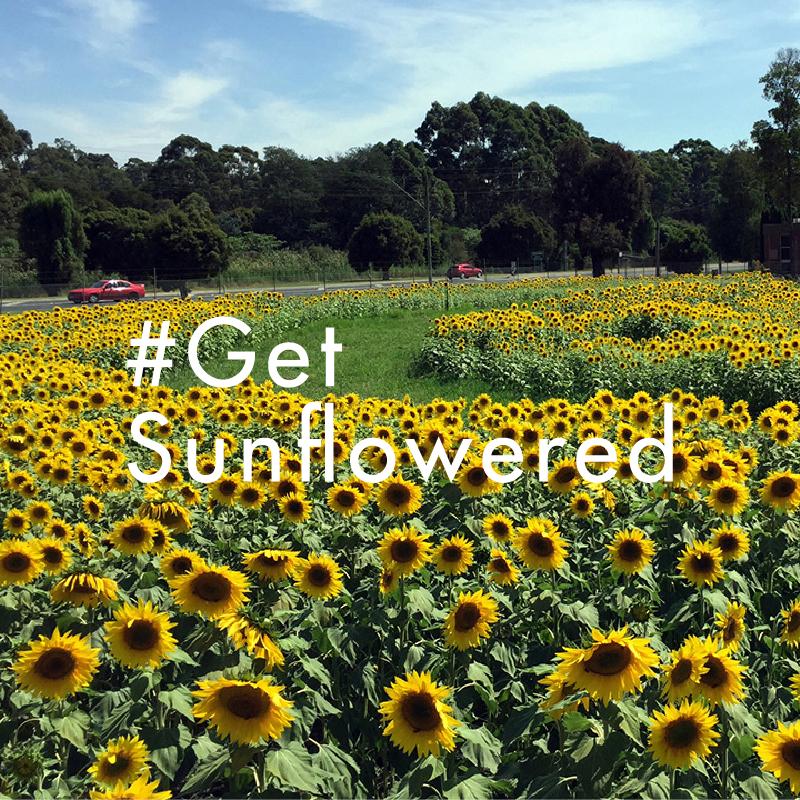 ReActivate_Website_LandingPage_Get Sunflowered.png