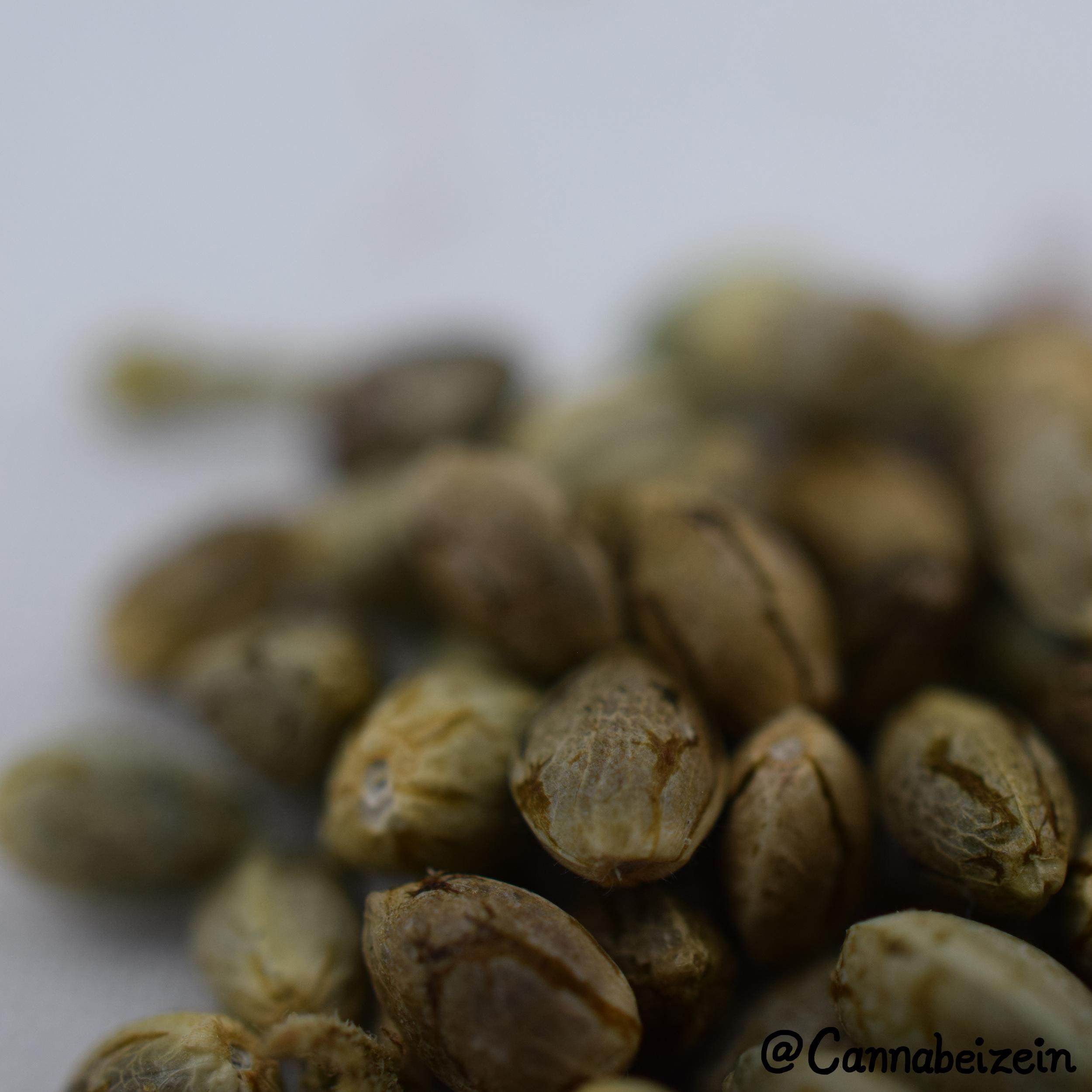 Cannabeizein 0212 - Mystery Mix Seeds - DSC_0842 copy.jpg