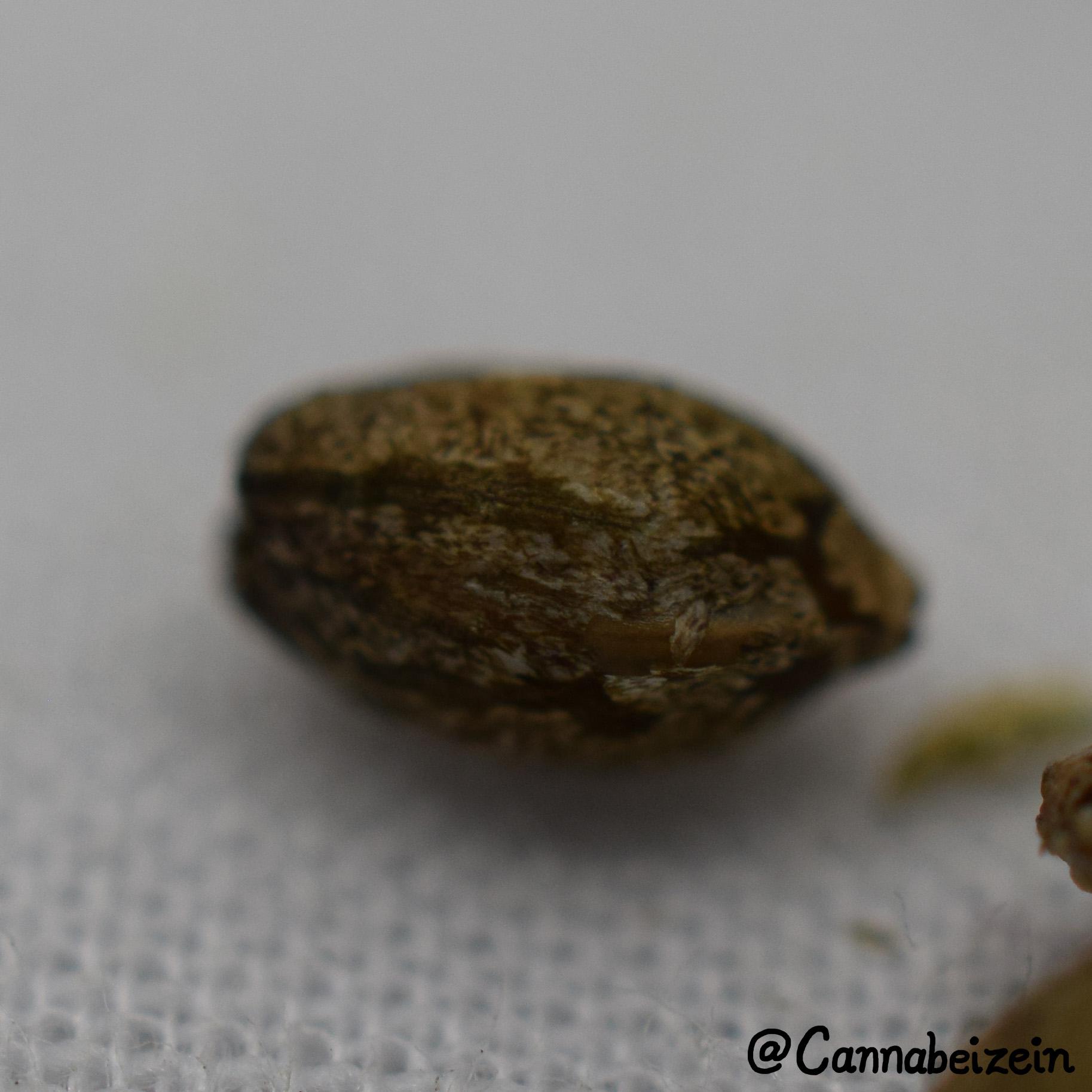 Cannabeizein 0217 - Mystery Mix Seeds - DSC_0799 copy.jpg