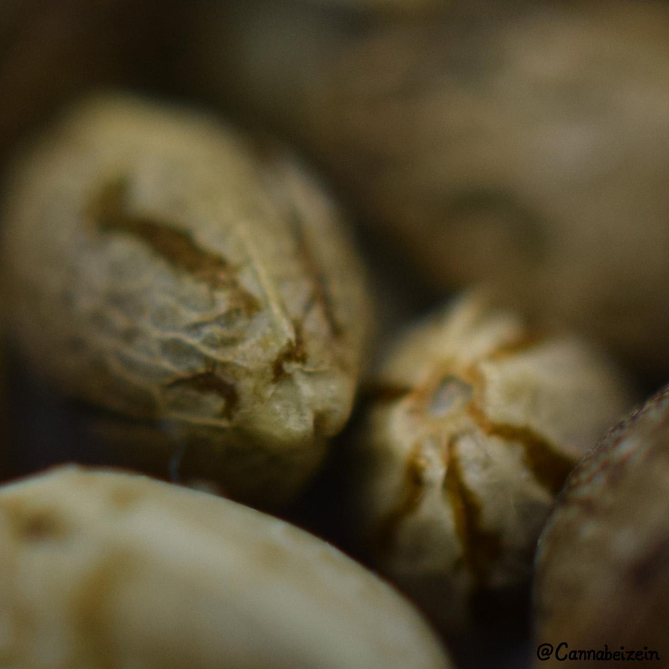 Cannabeizein 0224 - Mystery Mix Seeds - DSC_0839 copy.jpg
