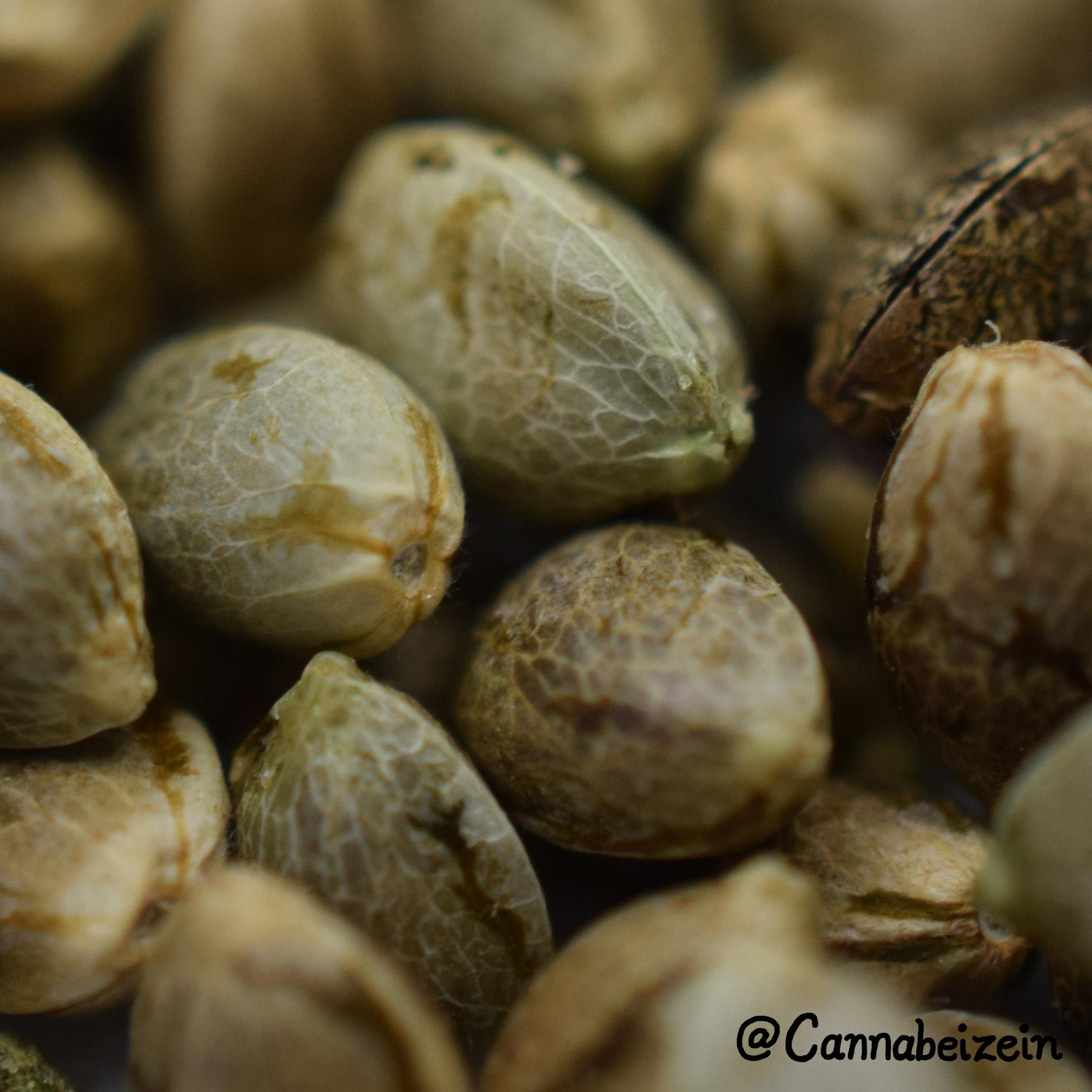 Cannabeizein 0226 - Mystery Mix Seeds - DSC_0819 copy.jpg