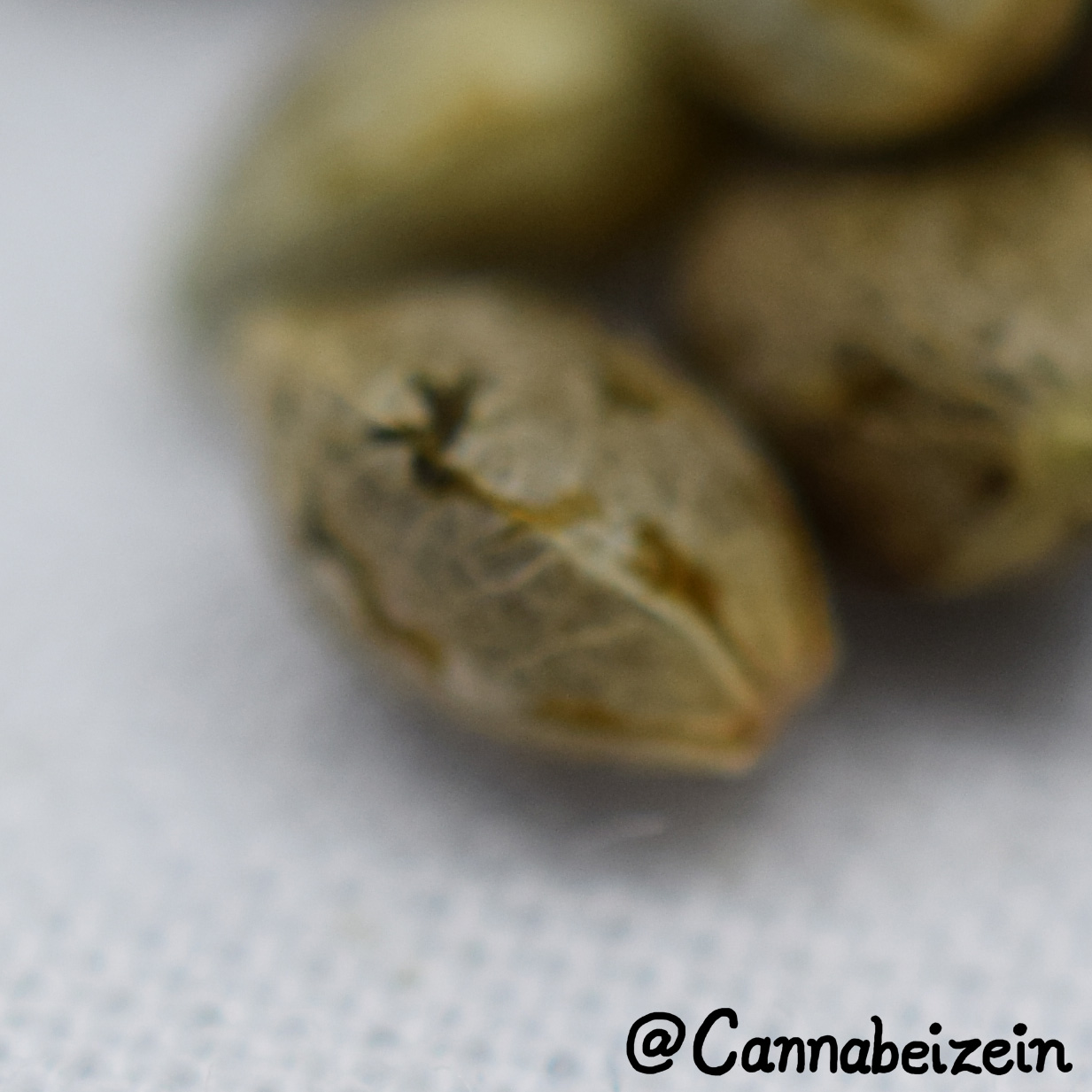 Cannabeizein 0228 - Mystery Mix Seeds - DSC_0821.jpg