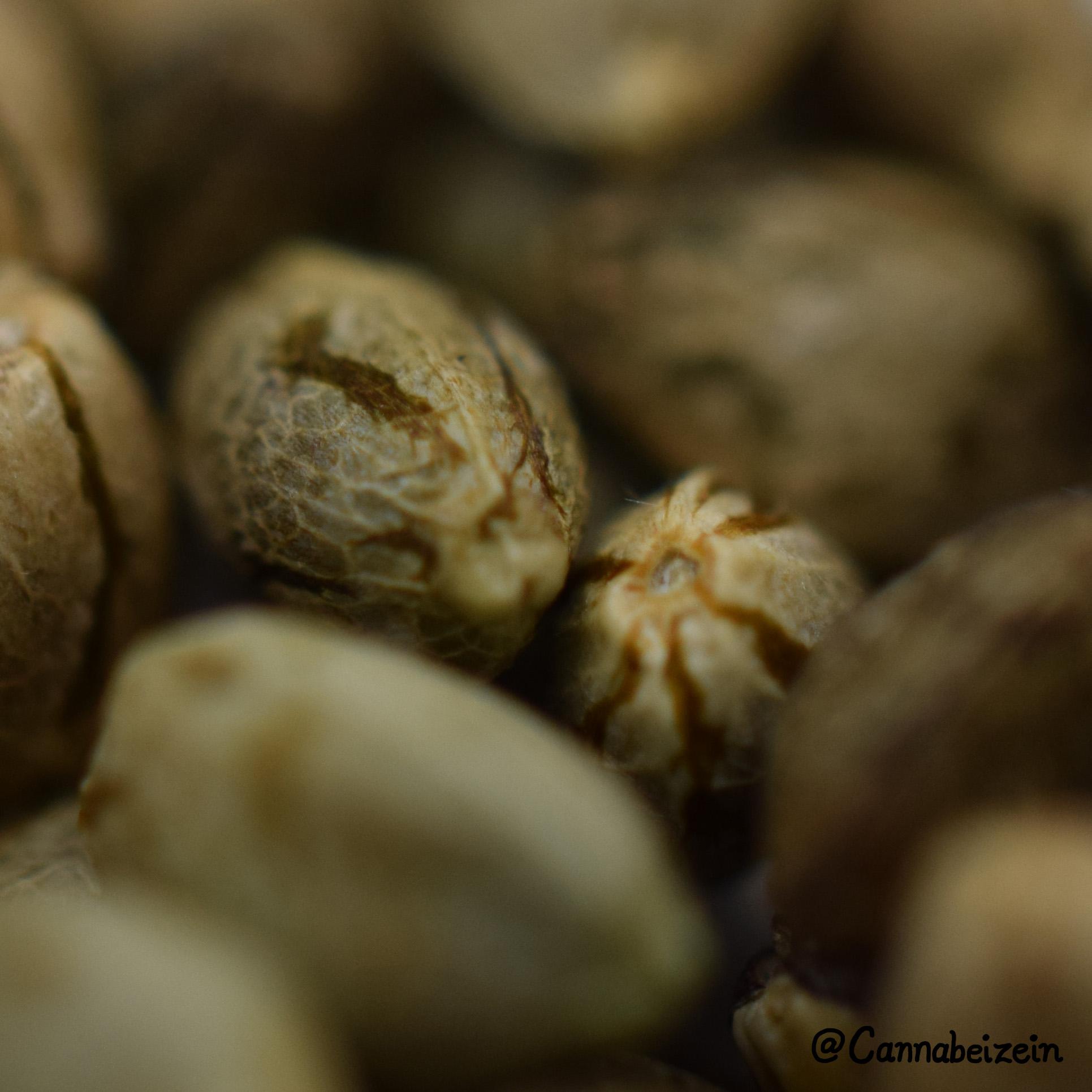 Cannabeizein 0232 - Mystery Mix Seeds - DSC_0828 copy.jpg