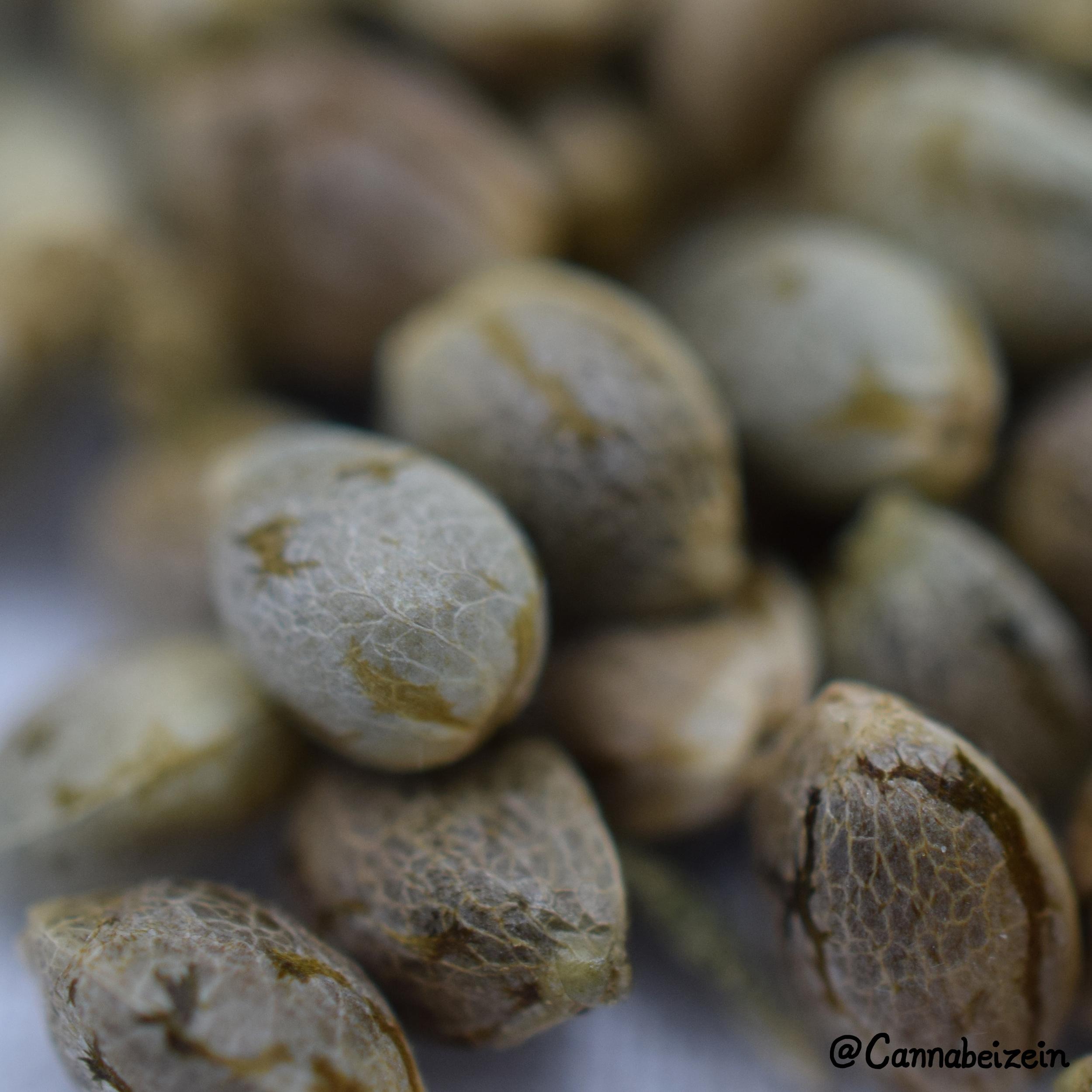 Cannabeizein 0234 - Mystery Mix Seeds - DSC_0830 copy.jpg
