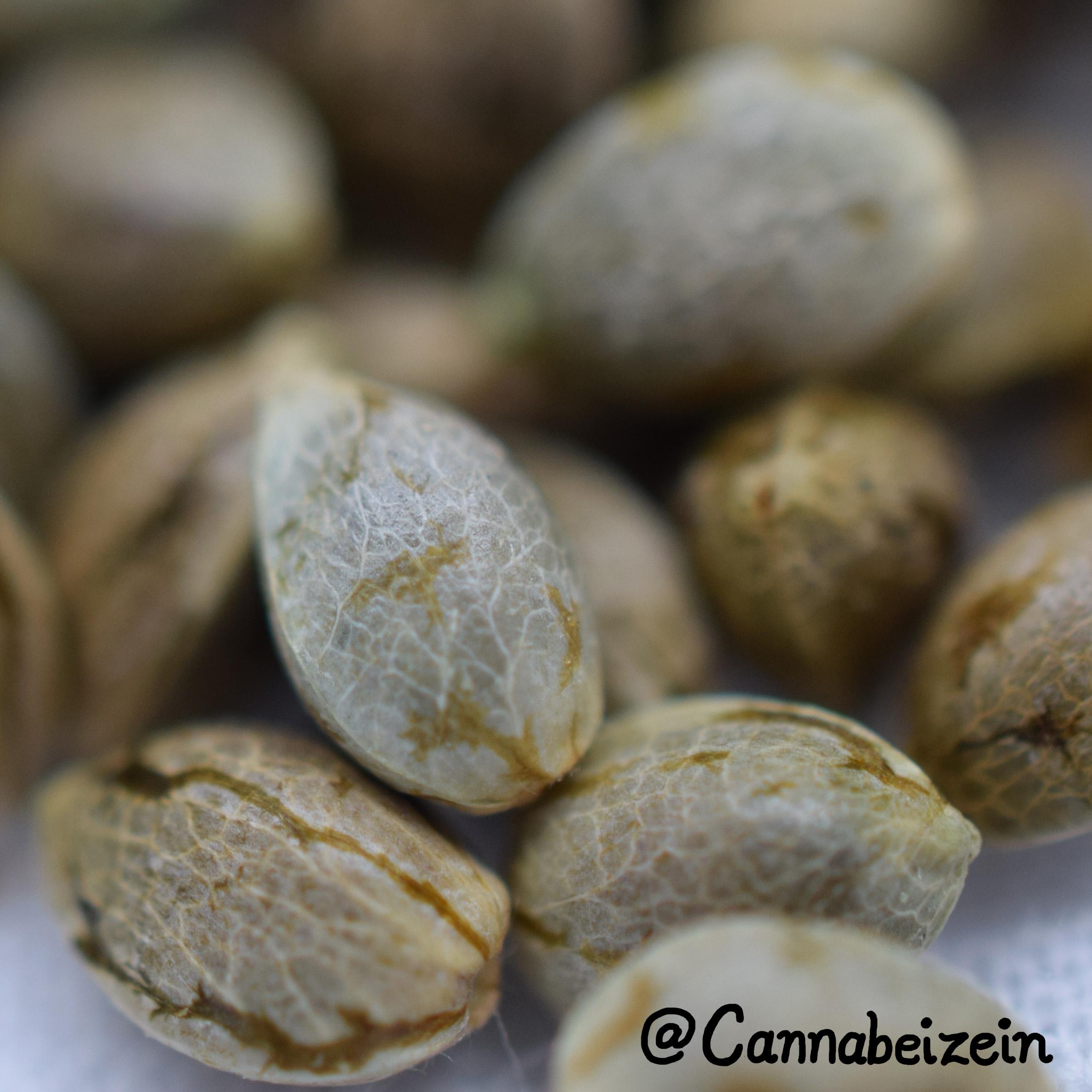 Cannabeizein 0237 - Mystery Mix Seeds - DSC_0834 copy.jpg