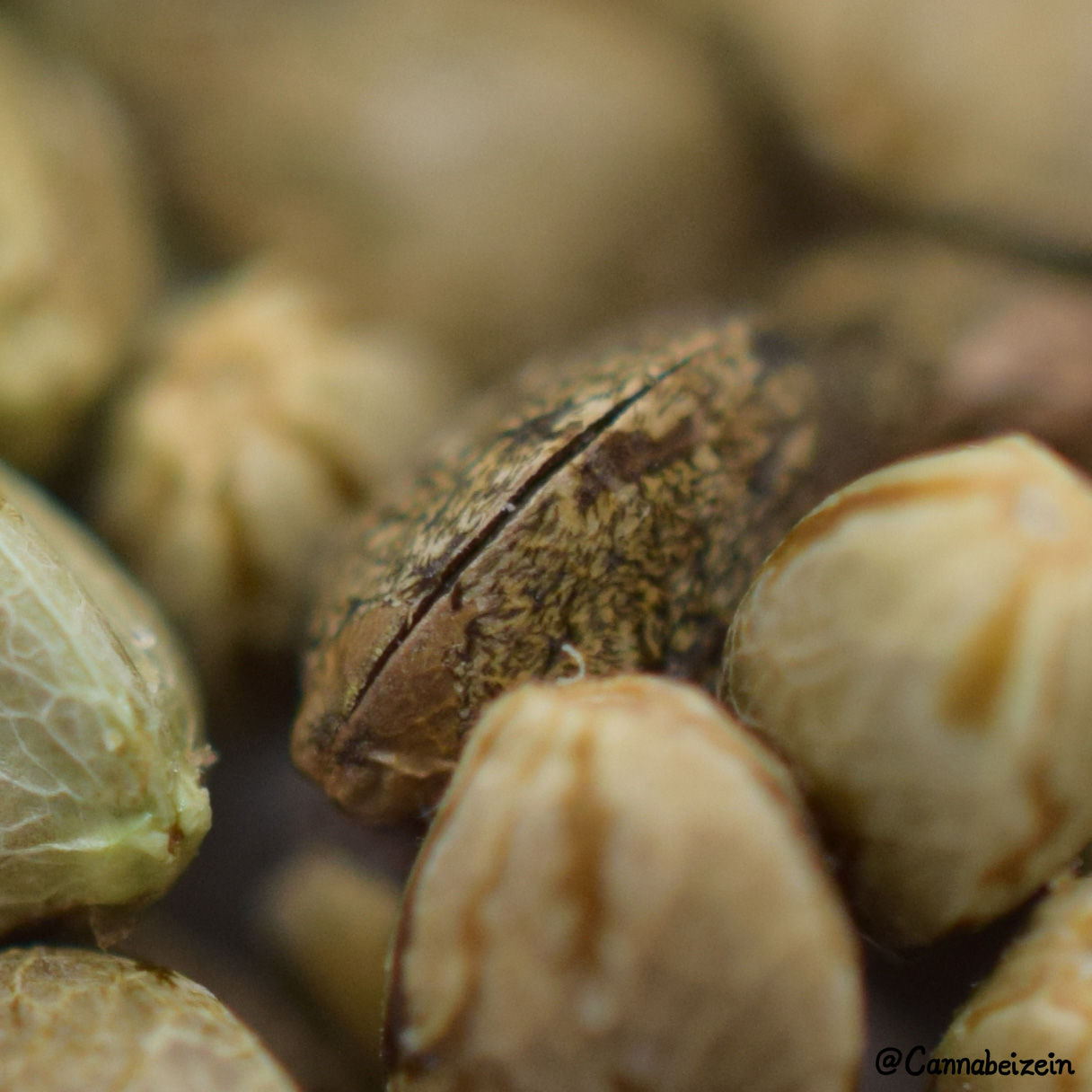 Cannabeizein 0239 - Mystery Mix Seeds - DSC_0818 copy.jpg