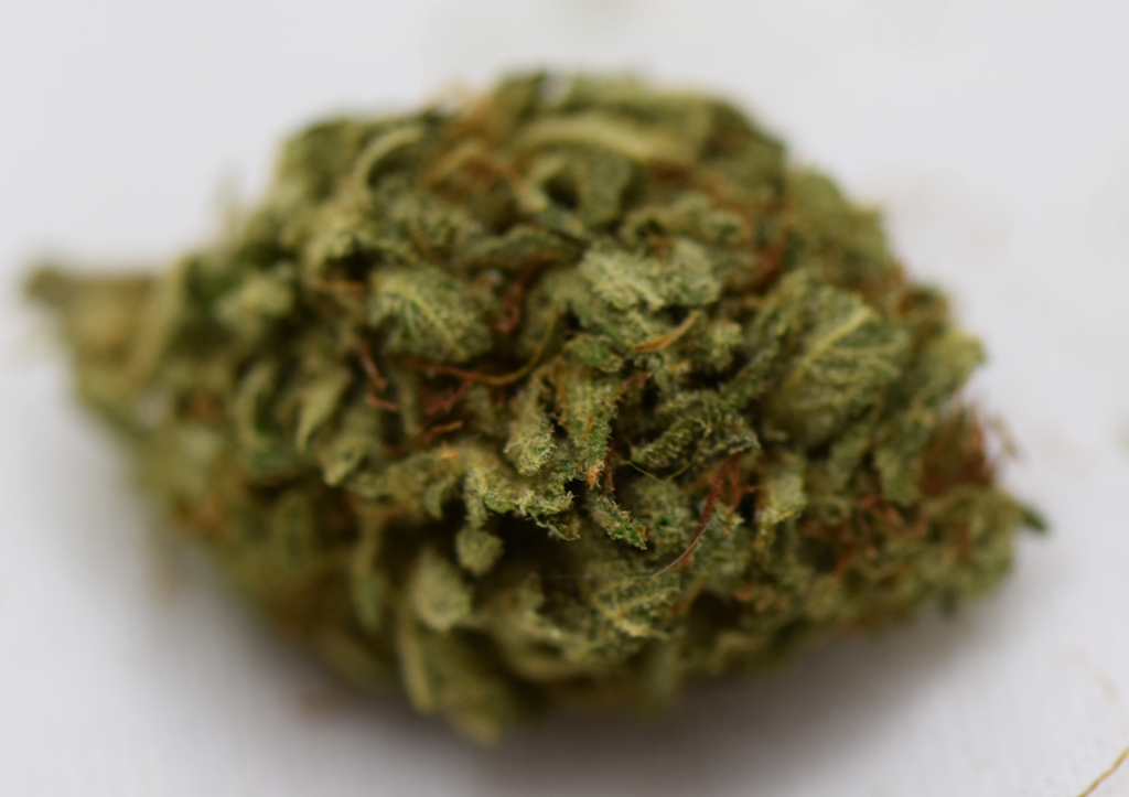 Kappa ~ Durban Special by Viracocha Taught Farmer ( @Viracocha_Taught_Farmer )