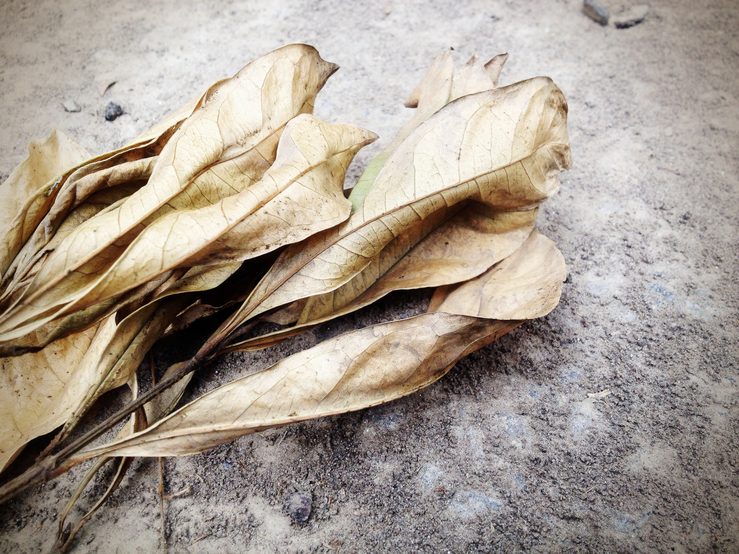 Weapon Leaves