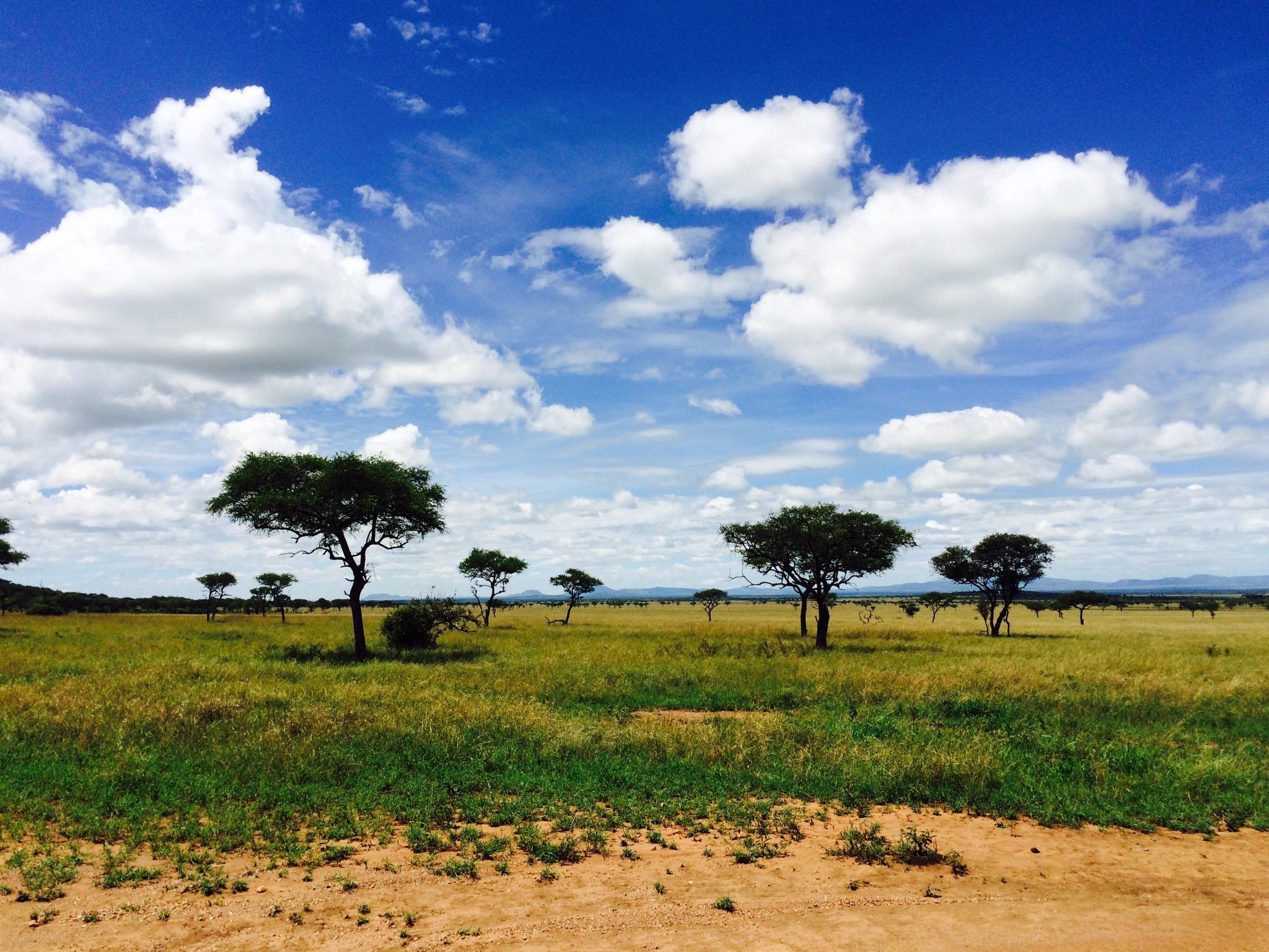 Rwanda Gorilla Safari and the Great Migration in Tanzania