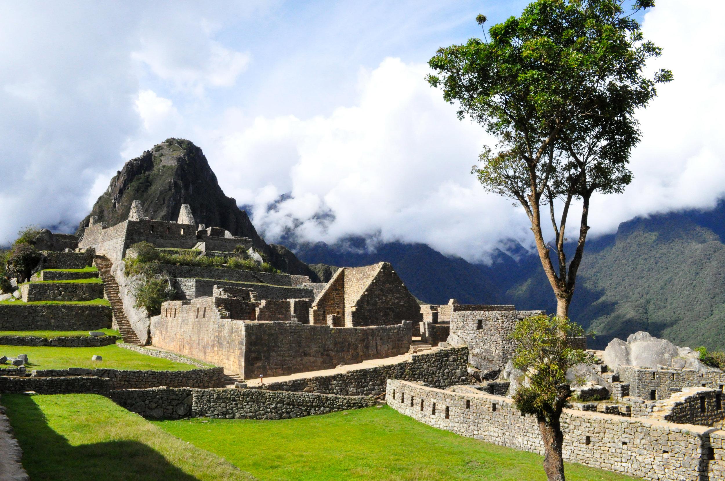 A sister tree grows in Machu Picchu
