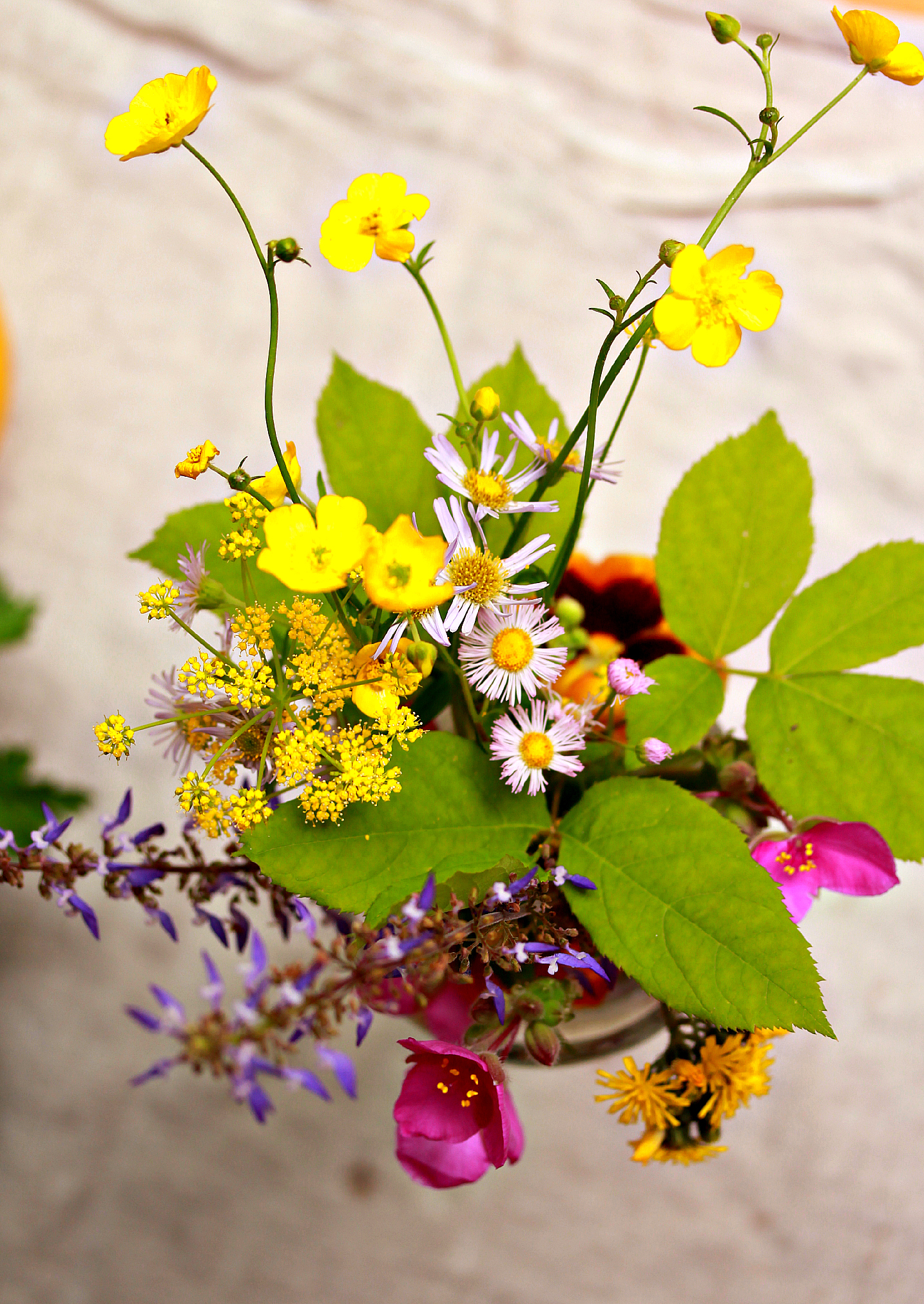 Wildflowers by Dena Testa Bray