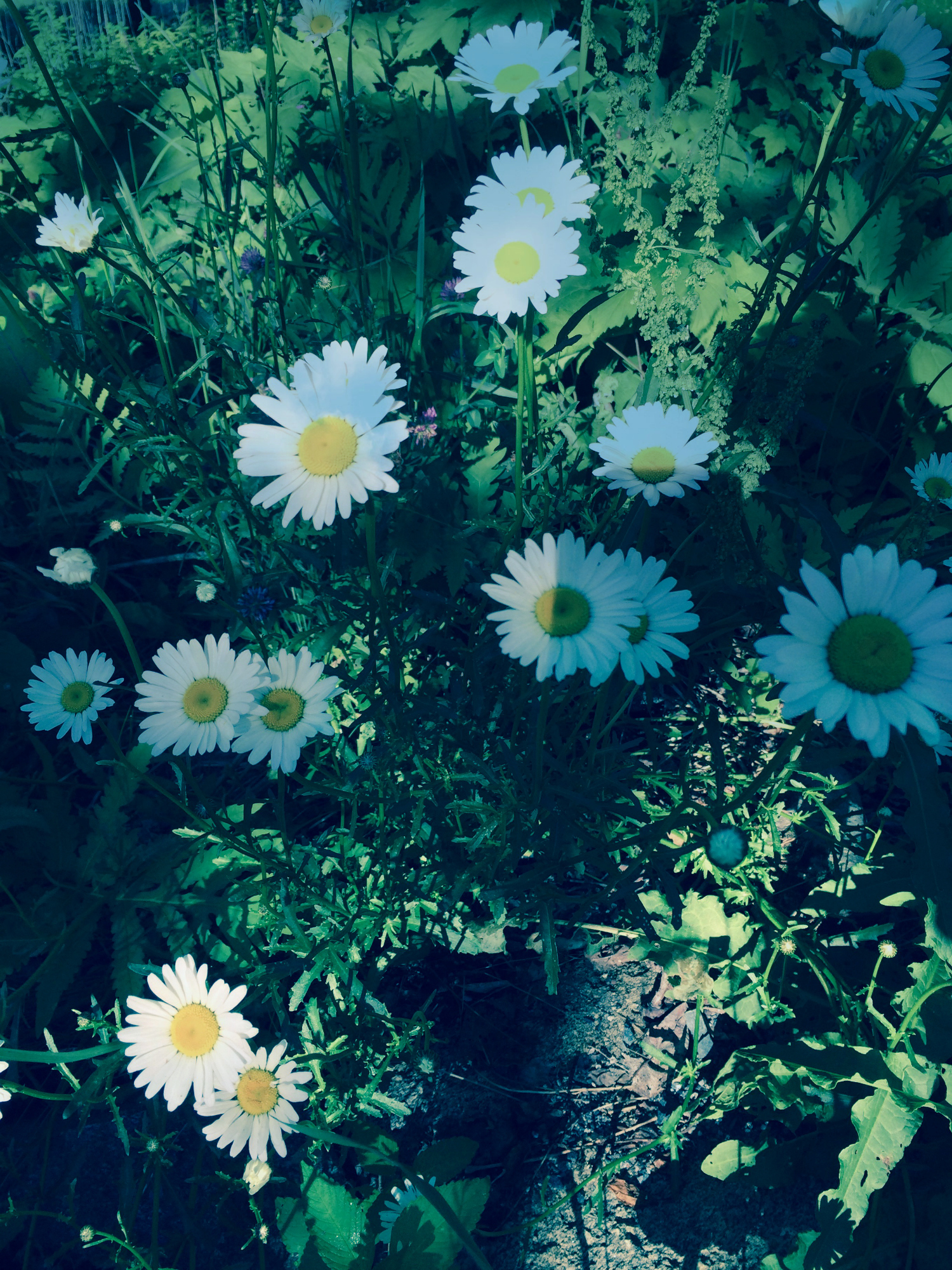 Wildflowers in Morning Light by Dena T Bray