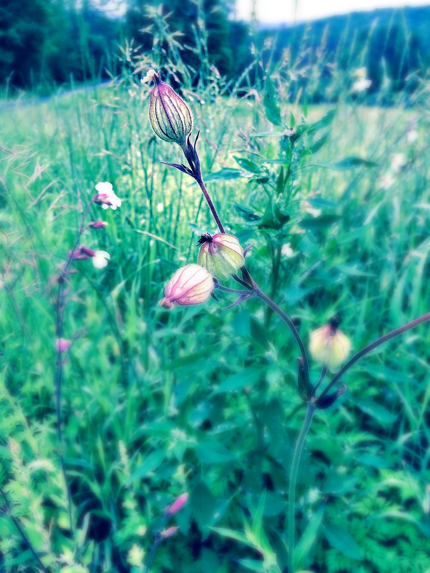 Single Flower in Morning by Dena T Bray