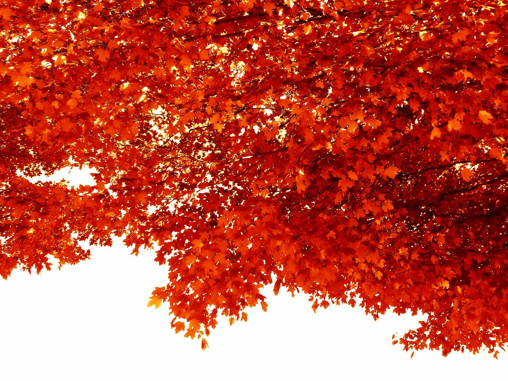 ©Blanket of Leaves by Dena T Bray