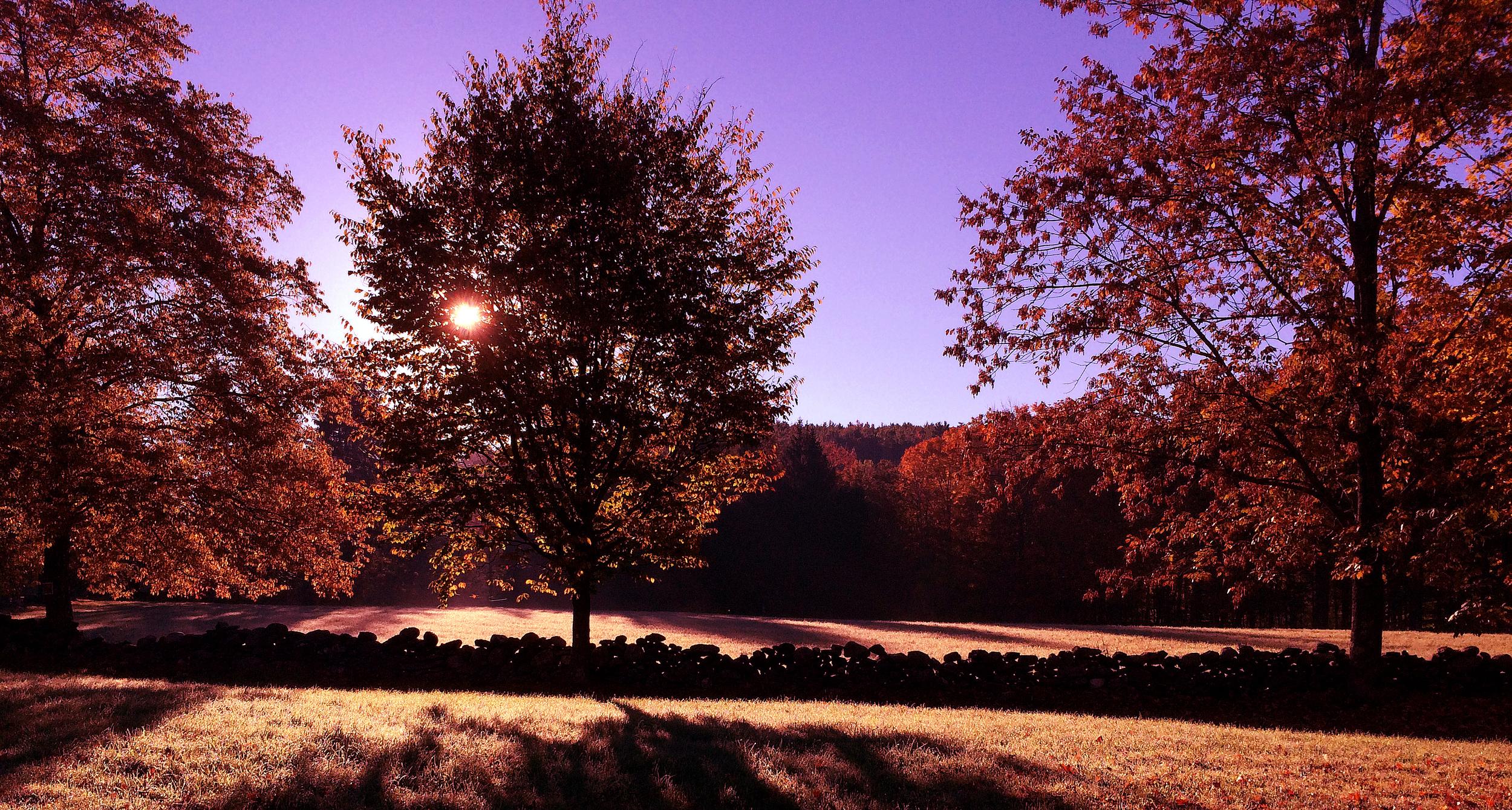 Morning Light by Dena T Bray